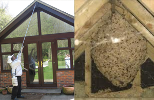 Any pest wasp nest in eaves