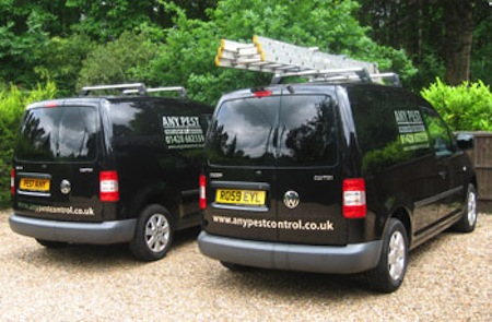 Pest Control Haslemere